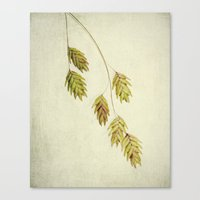 botanical Canvas Prints featuring botanical by Bonnie Jakobsen-Martin