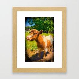 Nigerian Dwarf Goat Framed Art Print
