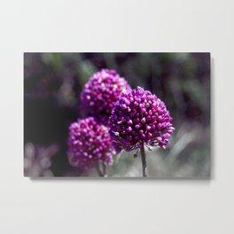 Wilde Onion Pink Flowers Metal Print