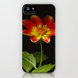Soul Dance of the Dahlia iPhone Case