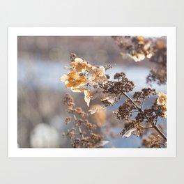 Sunlight through Dried Flowers Art Print