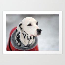 Portrait of beautiful Dalmatian dog Art Print