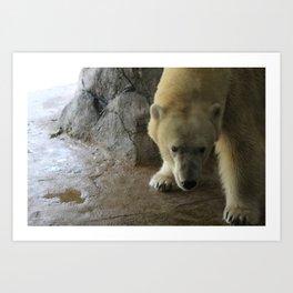 Anana the Polar Bear Art Print