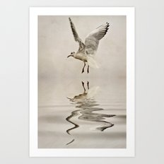 Black-headed gull Art Print
