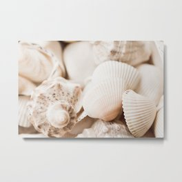 Sea snails and molluscs empty shells Metal Print