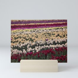 Lompoc Flower Farm Mini Art Print