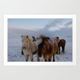 Friends in Iceland Art Print