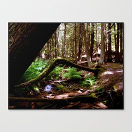 Crooked Log Canvas Print