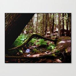Crooked Log Canvas Print