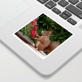 animal-photography-blur-close-up Sticker