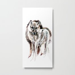 Artic Wolf (c) 2017 Metal Print