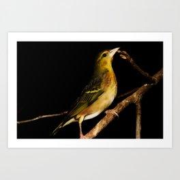 Tweety Bird Art Print