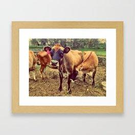 Cow Love Framed Art Print