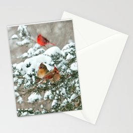 After the Snow Storm: Three Cardinals Stationery Cards