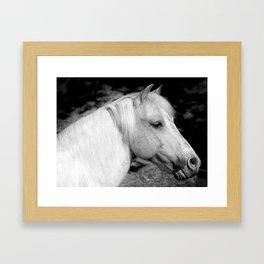 Poney  Framed Art Print