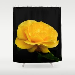 Golden Yellow Rose Isolated on Black Background Shower Curtain