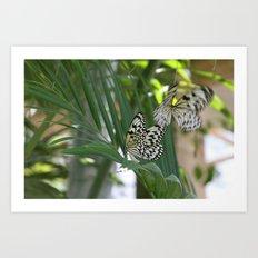 Papillon IV Art Print