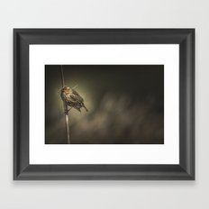 Red-winged Blackbird Framed Art Print