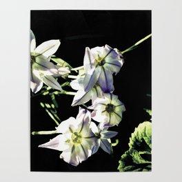 Wind Flowers On Black Poster