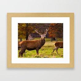 Herd on the Move Framed Art Print