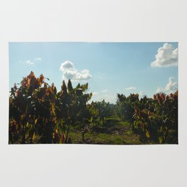 Cacao Fields Rug