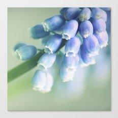 Blue Spring Beauty Canvas Print