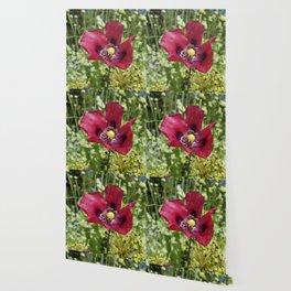 Pretty Purple Poppy Flower Wallpaper
