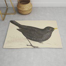 Blackbird. A history of British birds - Rev. F. O. Morris - 1862 Rug