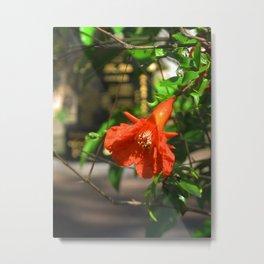 Orange 002 Metal Print