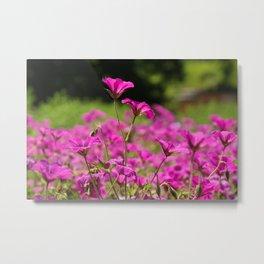 Pink Cransebill Metal Print