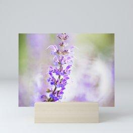 Salvia Flowers 5 Mini Art Print
