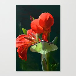 """""""Anticipation Of The Night"""" - Luna moth Painting Canvas Print"""