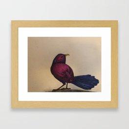 Fuchsia Bird Framed Art Print