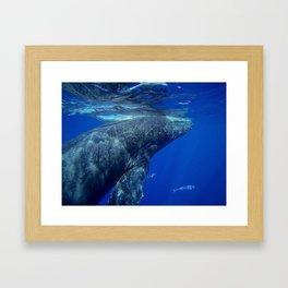 Underwater Humpbacks 12 Framed Art Print