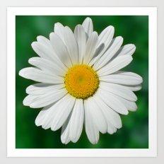Daisy Macro White 251 Art Print