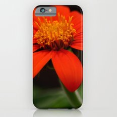 Red African Daisy iPhone 6s Slim Case