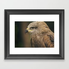 Power Bird I Framed Art Print