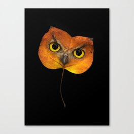Autumn Owl-2 Canvas Print