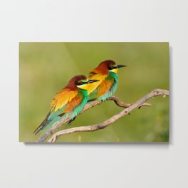 Portrait of pair a european bee-eater (Merops apiaster).  Metal Print