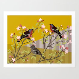 chaffinches in the cherry tree Art Print