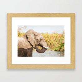 Elephant Feeding In Rover Framed Art Print