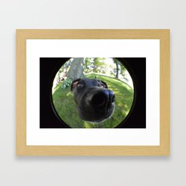 Puppy In Fish Eye Framed Art Print