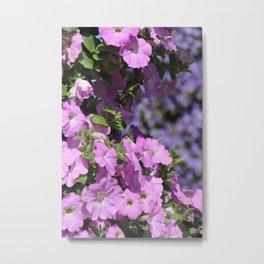 Petunia Metal Print