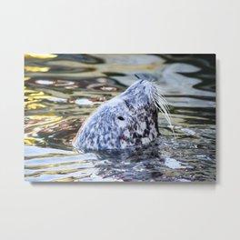 Friend Seal Metal Print