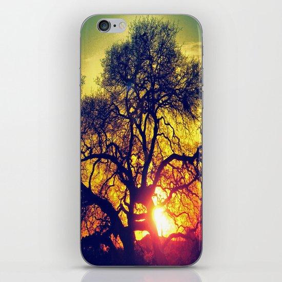 Through the trees iPhone & iPod Skin