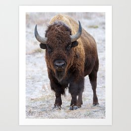 In The Presence Of Bison 2  Art Print