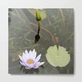 Blue Lotus Bud to Bloom Metal Print