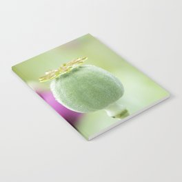 Hungarian Blue Bread Seed Poppy | Seed Pod Alternate Perspective Notebook