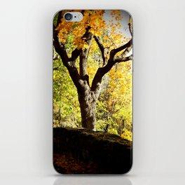 Yellow foliage iPhone Skin
