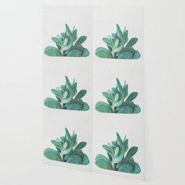 Crassula Wallpaper